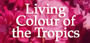 Living Colour of the Tropics